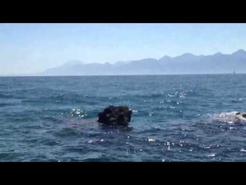Sea at Antalya - 720p HD