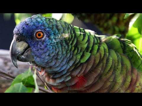 5 Burung Terlangka Di Dunia