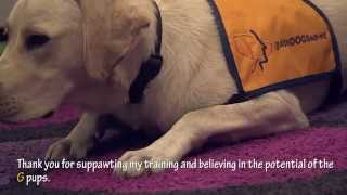 Guide Dogs Sa.nt - Puppy-in-training Granger Shows Off His Obedience Skills