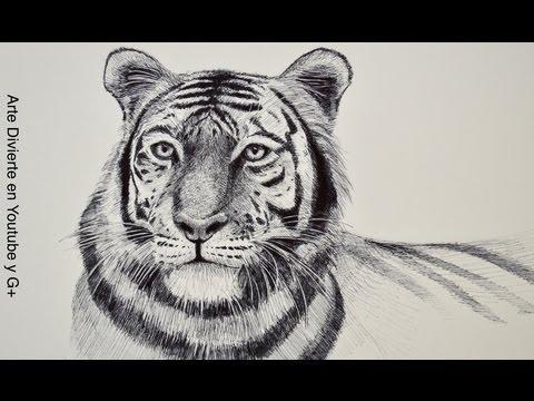 Dibujando animales: cómo dibujar un tigre - Arte Divierte