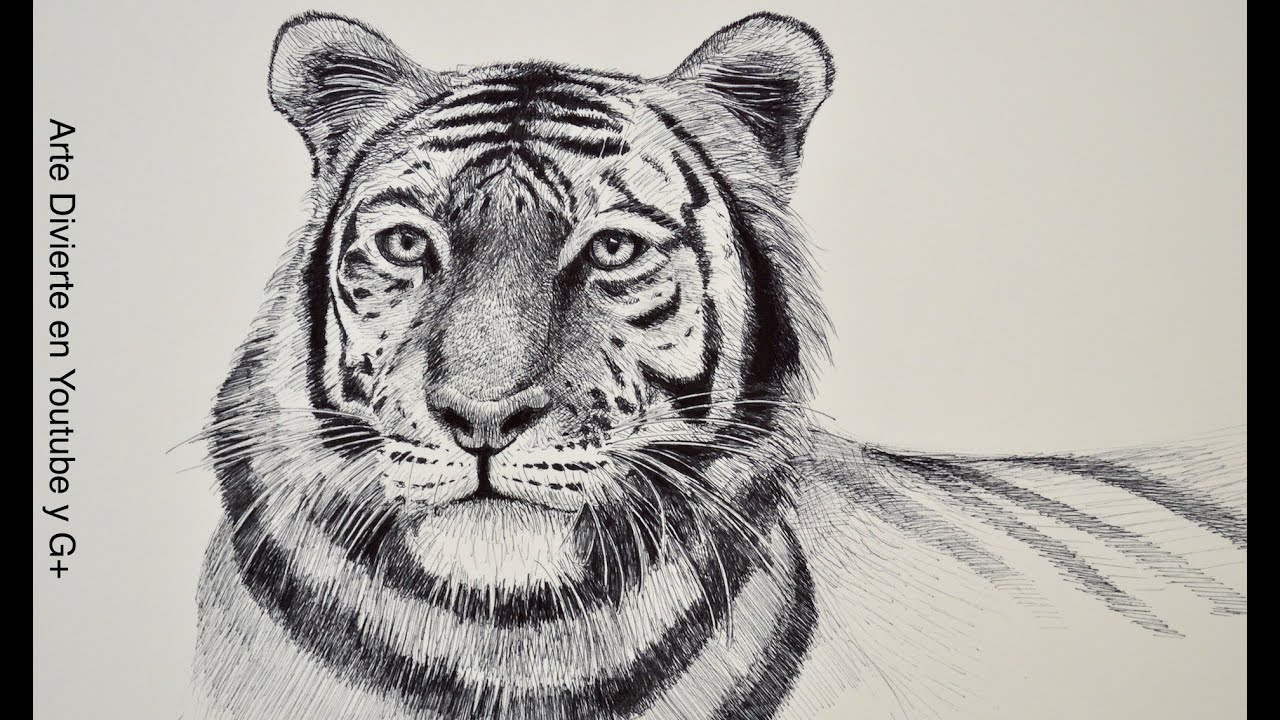 Dibujando animales c mo dibujar un tigre arte divierte for Dibujo de una piedra para colorear