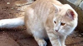 Кошки просят о помощи
