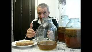 Как вырастить чайный гриб с нуля. Три способа размножение чайного гриба