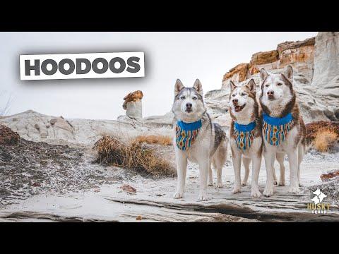 Hiking Utah With Dogs | Husky Squad
