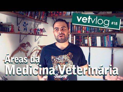 Áreas de atuação do médico veterinário   VetVlog #18