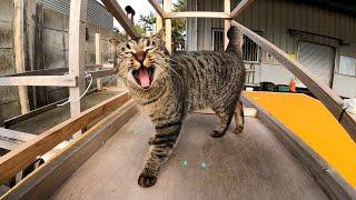 漁港にいたキジトラ猫を撫でるとゴロゴロ言いながらすり寄ってきてカワイイ