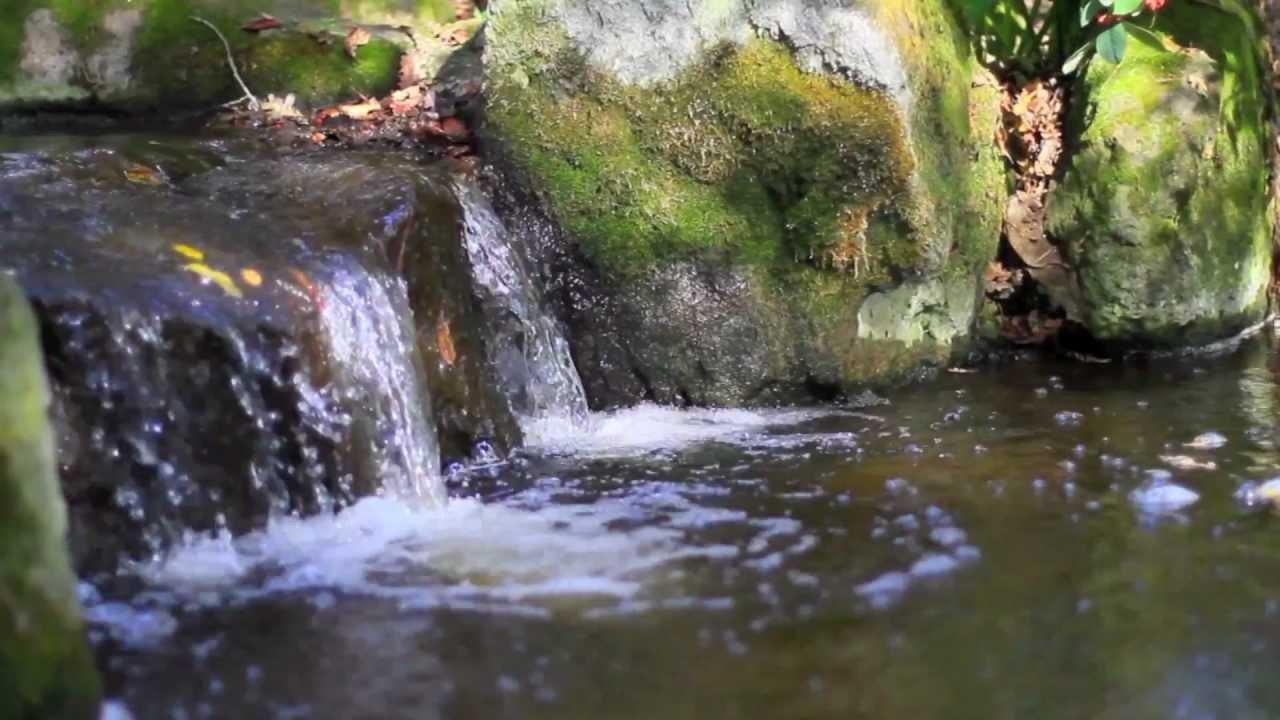 Micke Grove Park   Japanese Garden