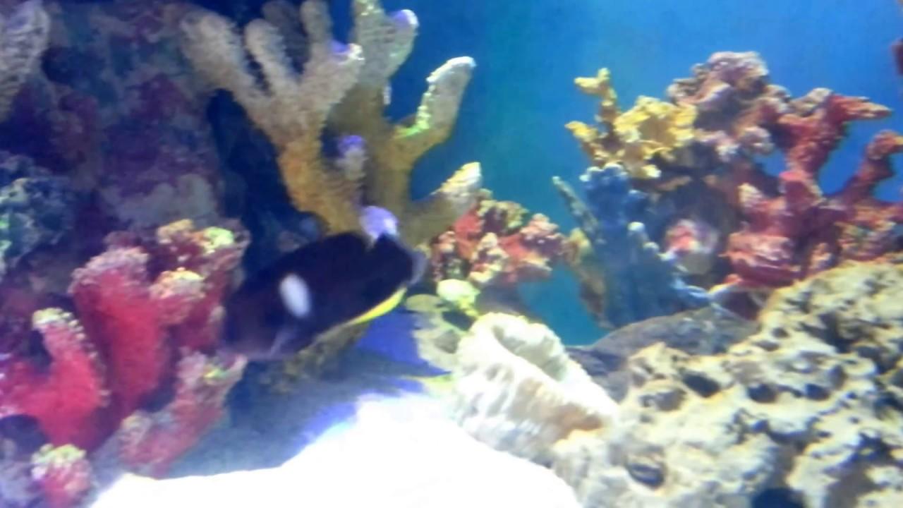 Fish Aquarium In Coimbatore - Acrylic aquariums in india madoverfish aquariums water arts pvt ltd