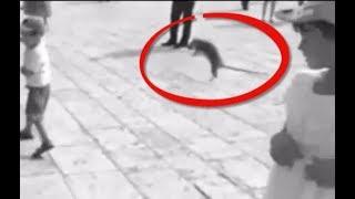 فأر يلكم فتاة في وجهها في ساحة عامة !!