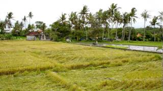 The Art of Rice Production