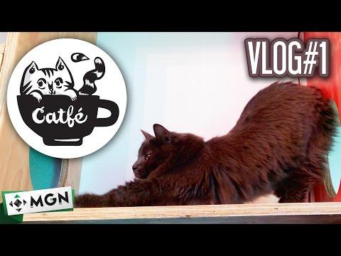 Vlog: ¡¡El primer cat café en Vancouver!! 🐱🐱🐱