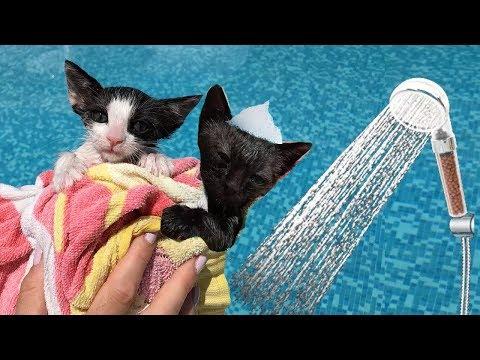 Intentando bañar a mis gatitos bebés Luna y Estrella / Funny cats