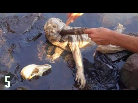5 Creepiest Creatures Found In The Woods