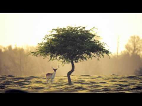 Ambient Folk Instrumental - The Last Stand (Original)