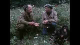 В мире животных. Обезьяний остров (1980)
