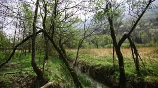 02 Riserva Naturale Lago di Piano - Il patrimonio ambientale.flv