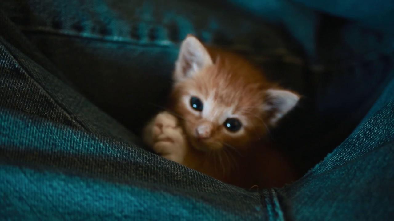 Introducing  kittens Samba, Salsa, and Mambo