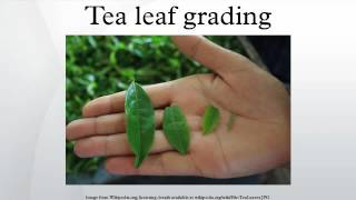 In the tea industry, tea leaf grading is the process of evaluating ...