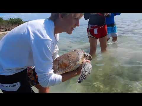 Green Turtle Populations, The Island School