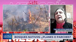 """Bosques nativos e incendios: """"Las propuestas del Gobierno no consideran los problemas integralmente"""""""