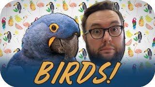 Bird INVASION!