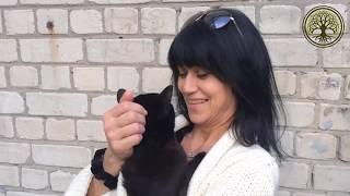Prana Box в помощь любимым животным (у кошки пищевая аллергия)