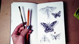 Drawing Moths | Sketchbook Sunday Episode 1