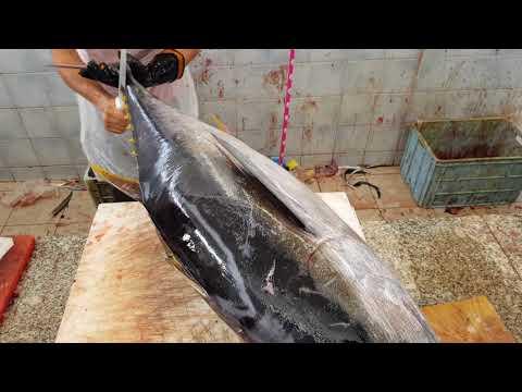 Tuna Fish 40 KG $400 Fillet By Primitive Ways।Giant Tuna Fish Fillet By Knives।Skilled Fish Fillet
