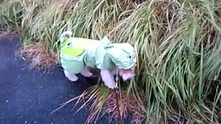 雨の日の散歩を楽しいものに... わたし的な話ですけど(笑) ハルオはかな...