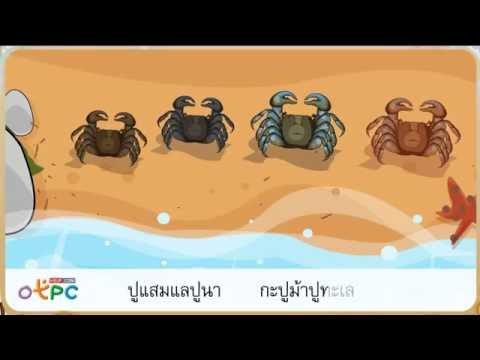 มาตราตัวสะกดแม่ ก กา - สื่อการเรียนการสอน ภาษาไทย ป.2