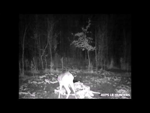 AVPS L.R. HUNTERS - Caprior Noaptea