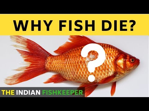 Why Fish Die In Aquarium | How To SAVE Your Fish From Dying