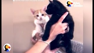 SOLAR ECLIPSE KITTENS | The Dodo