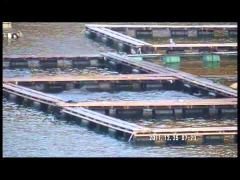 Captive dolphins in pens at Taiji, Japan
