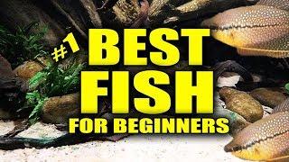 Best Aquarium Fish for beginners