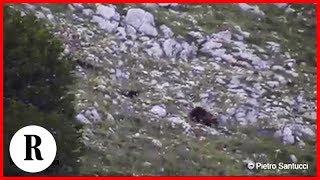 Abruzzo, la prima uscita degli orsetti con la madre