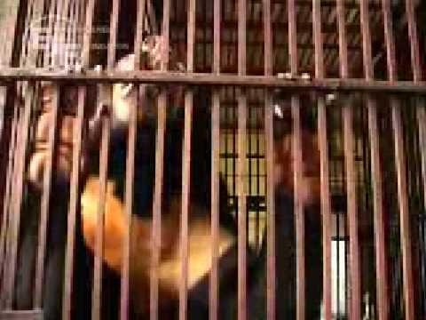 Please Vietnamese, Say No to Animal Killing!