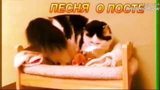 Обида кота очень сильна