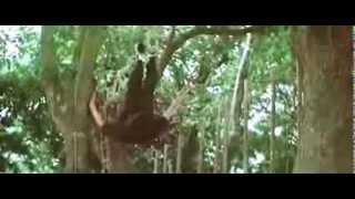 Wwe rikishi fogyás, Film Kung Fu - A legend reborn Ingyenes Online