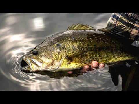 Fishing Today – Angling Edge TV
