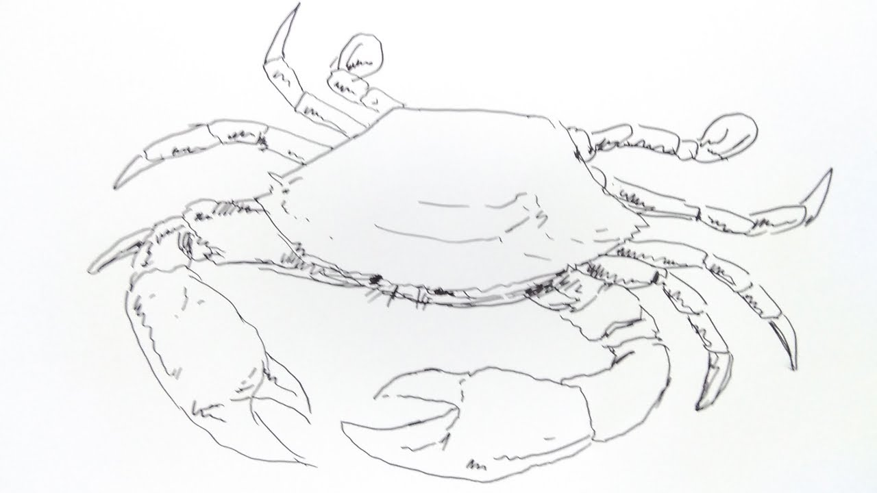 cara menggambar kepiting how to draw crab