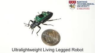 Cyborg Insect: Ultralightweight Living Legged Robot