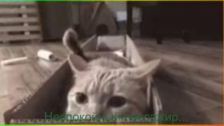 Прикольные животные.Видео для детей и не только Создай себе хорошее настроение