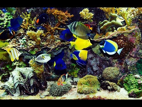 ✔ Beautiful Real Colourful Marine Fish Aquarium! Relaxing Natural Sounds