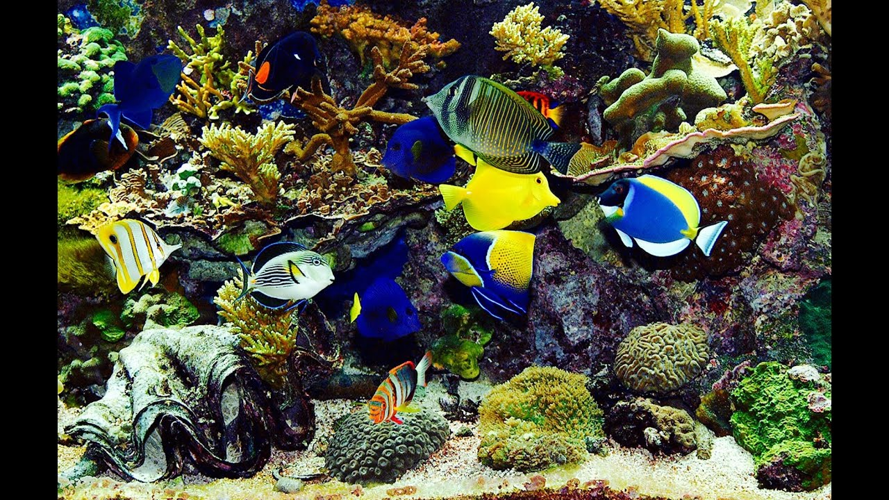 Beautiful real colourful marine fish aquarium relaxi for Natural fish tank