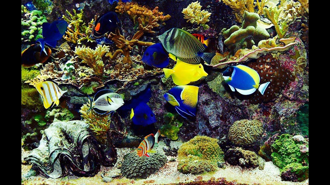 Finding Nemo Wallpaper 3d Beautiful Real Colourful Marine Fish Aquarium Relaxing