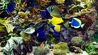 ✔ Beautiful Real Colourful Marine Fish Aquarium! (29:00) Relaxing Natural Sounds~nice Hd