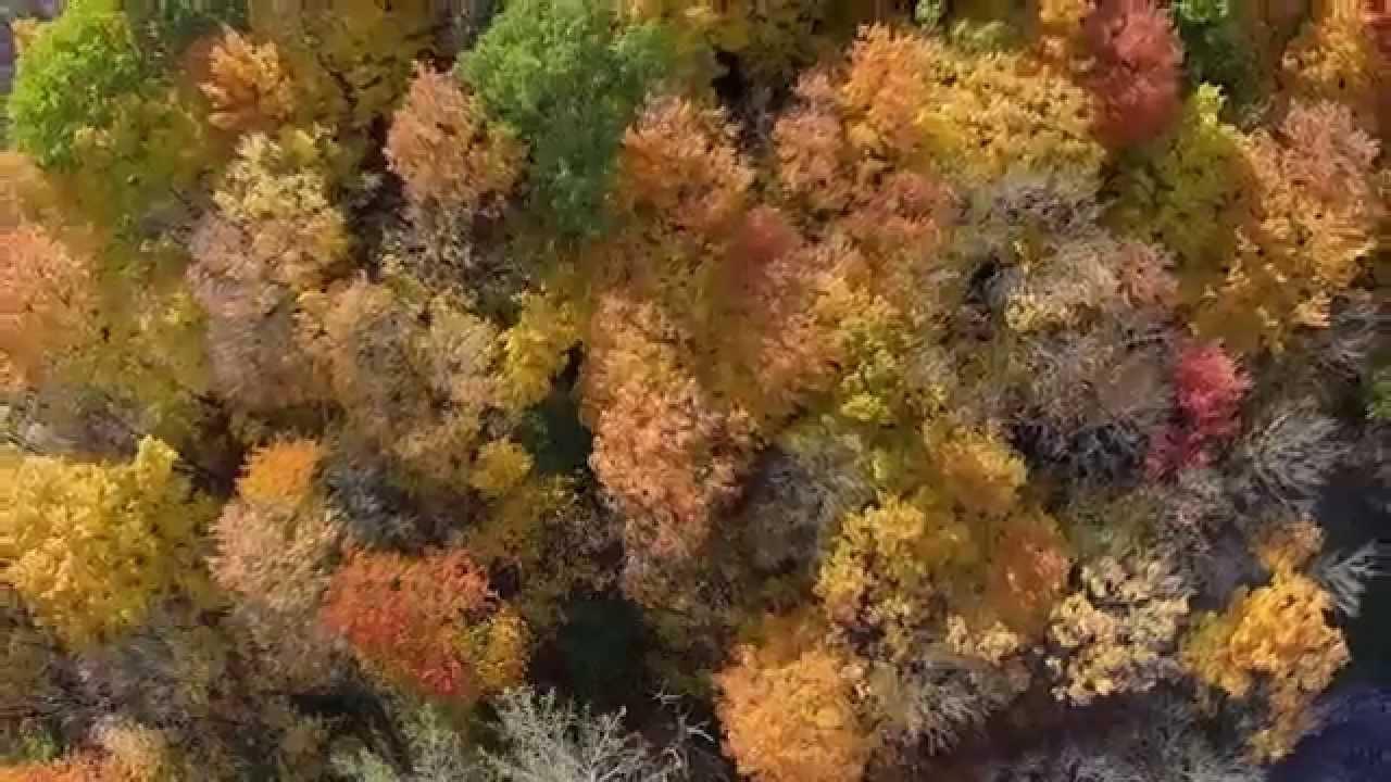 Edwards Garden Fall - YouTube