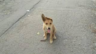 Смешной ушастый щенок