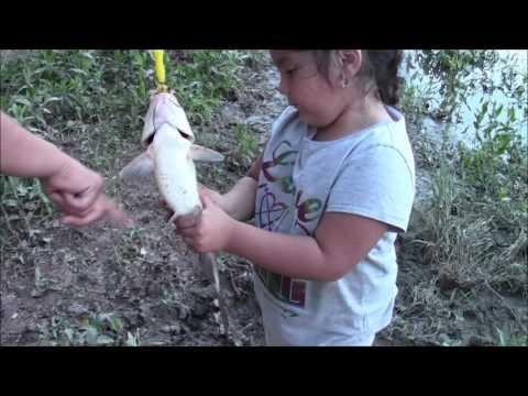 buena pesca y un mapache se quiere robar los pescados